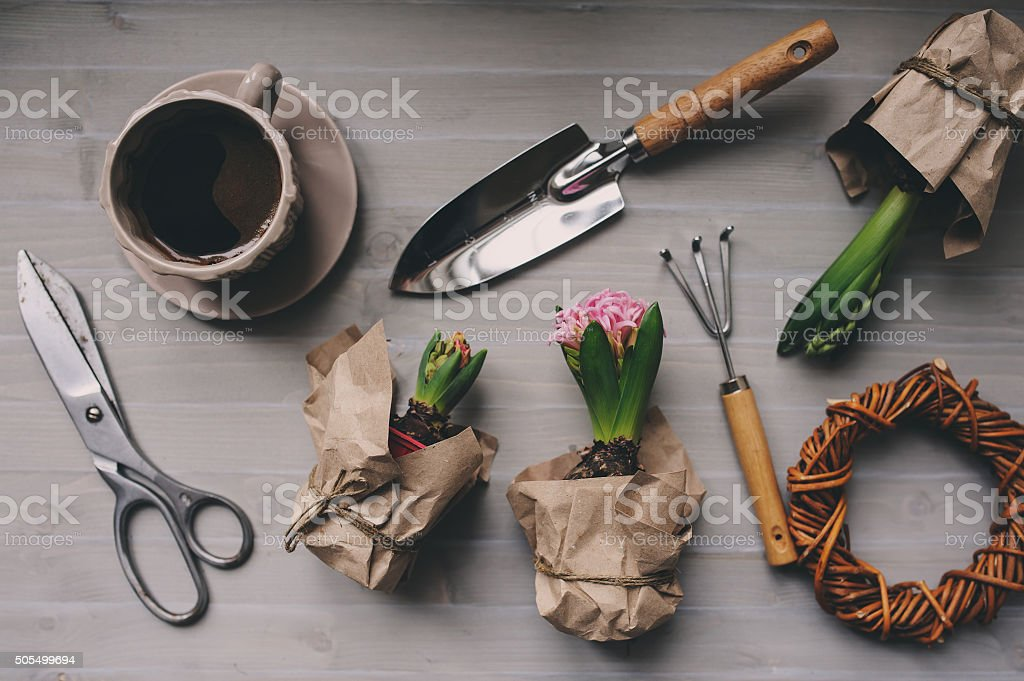 spring garden preparations. Hyacinth flowers and vintage tools on table stock photo