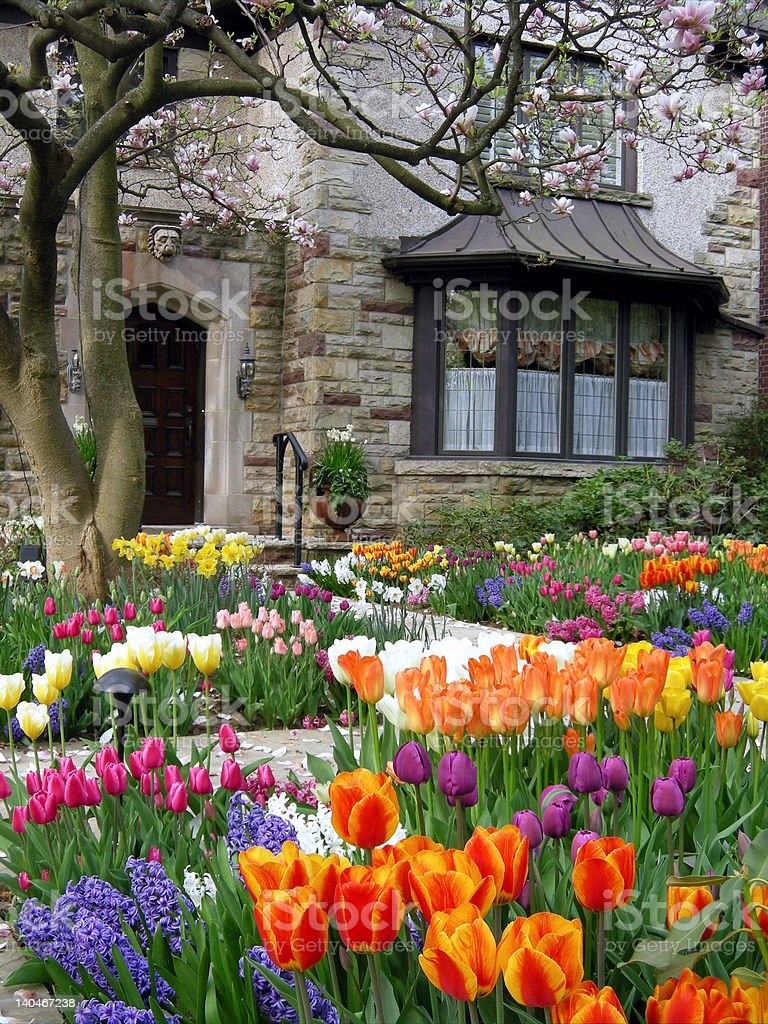 Spring garden, tulips and hyacinths stock photo