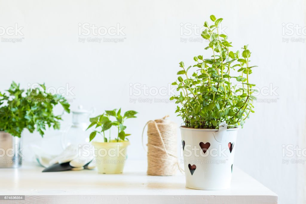 Spring gardening light concept royalty-free stock photo