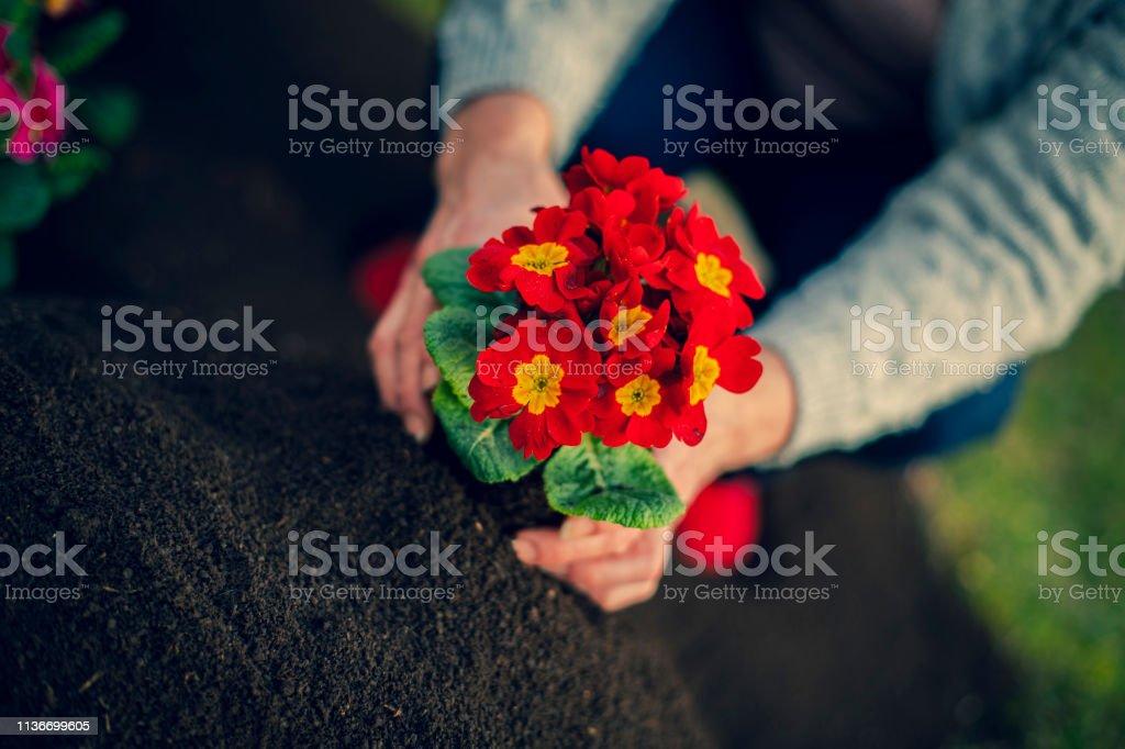 spring gardening stock photo