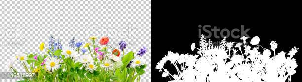 Photo of spring grass and daisy wildflowers isolated background