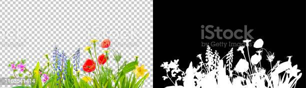 Spring grass and daisy wildflowers isolated with clipping path and picture id1163541414?b=1&k=6&m=1163541414&s=612x612&h=blvudw9psdezua1zojtb9 fombc ia7kibvbgbuy5i8=