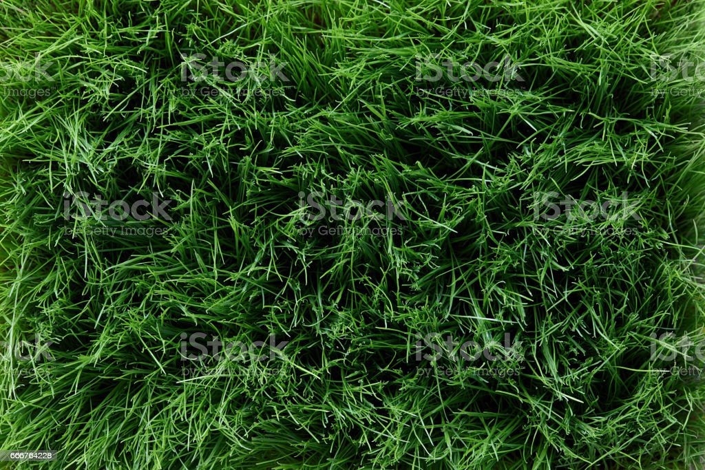 Spring grass background foto stock royalty-free