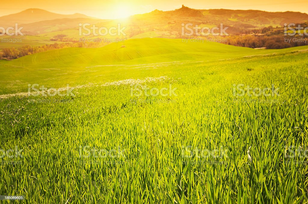 Spring grass field at dusk royalty-free stock photo
