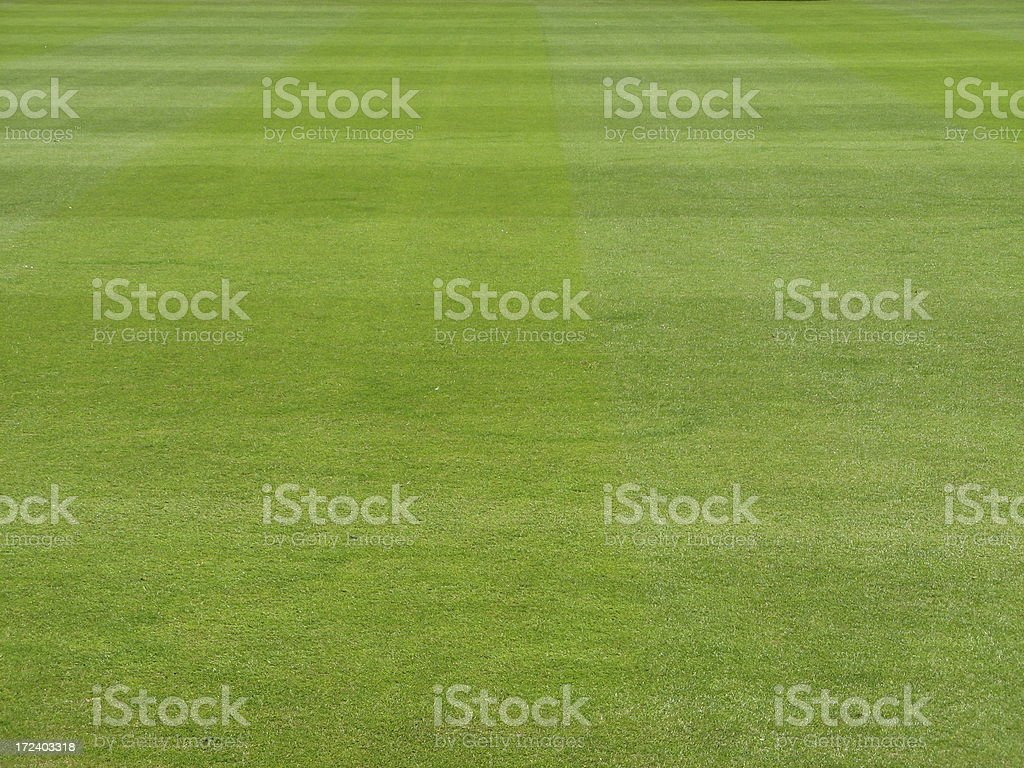 Spring grass field royalty-free stock photo