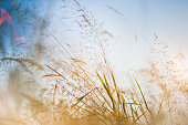 Spring grass in the summer breeze