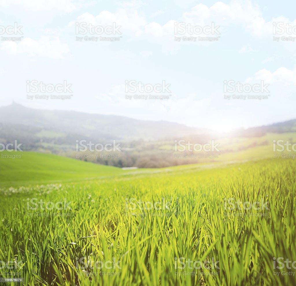 Spring grass landascape at sunsrise stock photo