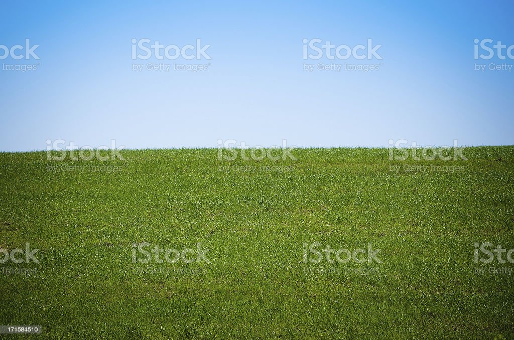 Spring grass landascape royalty-free stock photo