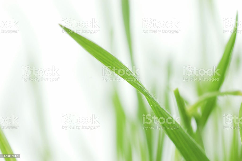 Spring grass royalty-free stock photo