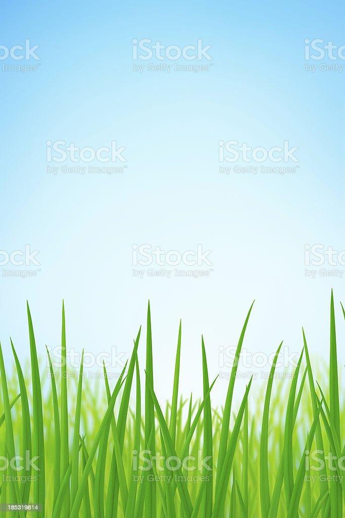 Spring Grass royalty-free stock photo