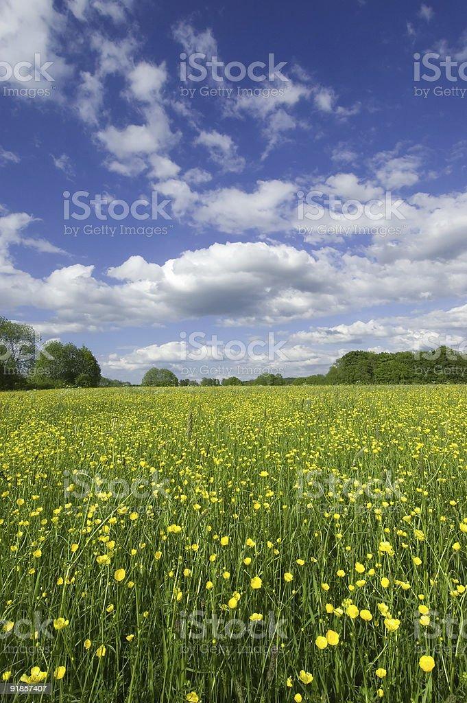 Spring Grassland stock photo