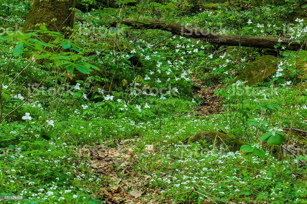 Spring, Great Smoky Mountains NP, TN stock photo