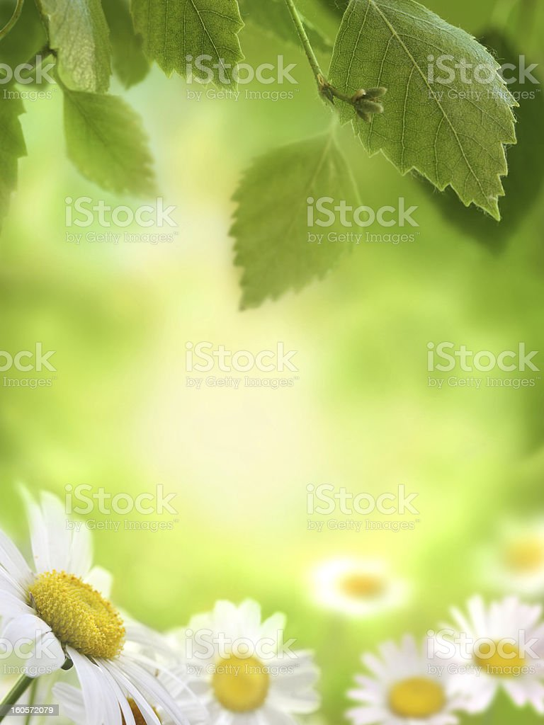 Spring Green Background stock photo