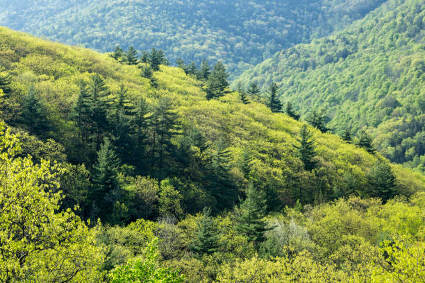 Spring Green, Catskills stock photo