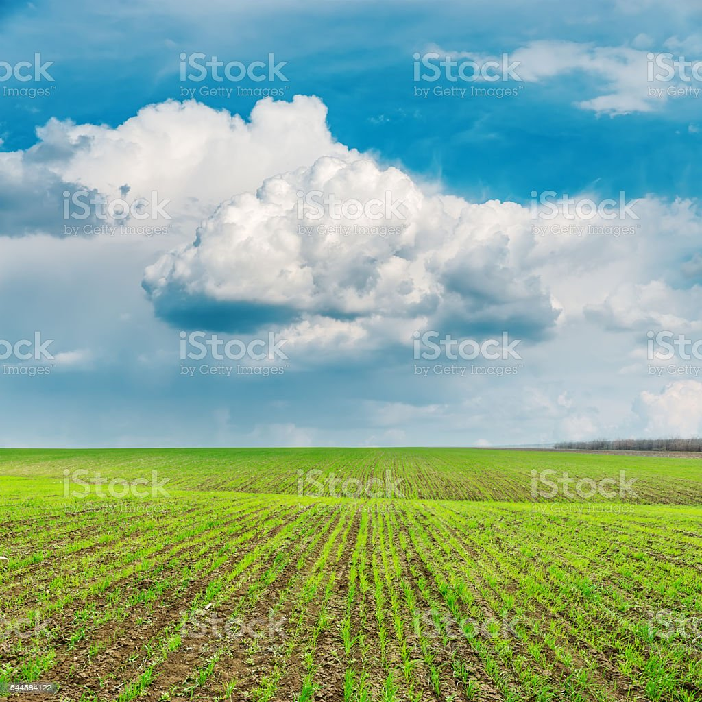 spring green field and low dramatic clouds over it stock photo