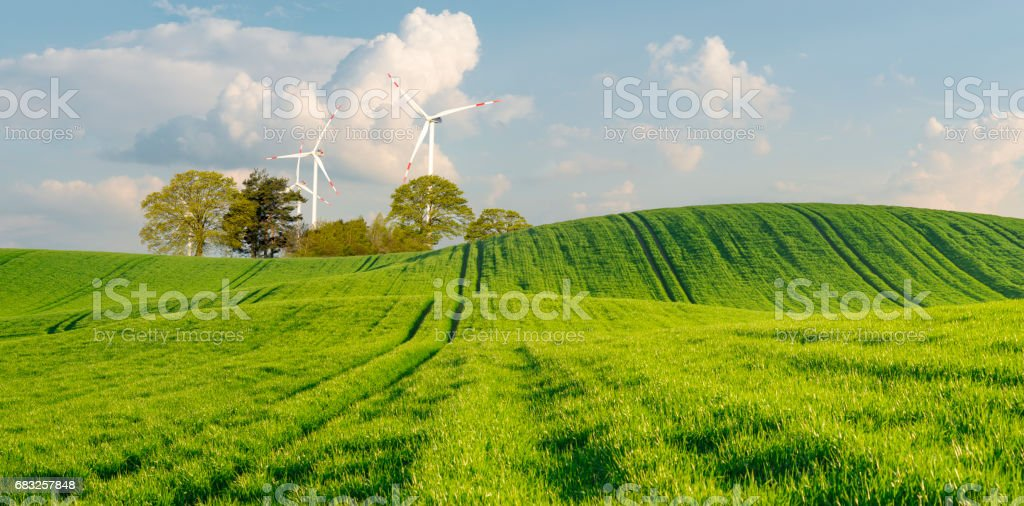 spring green field foto de stock royalty-free
