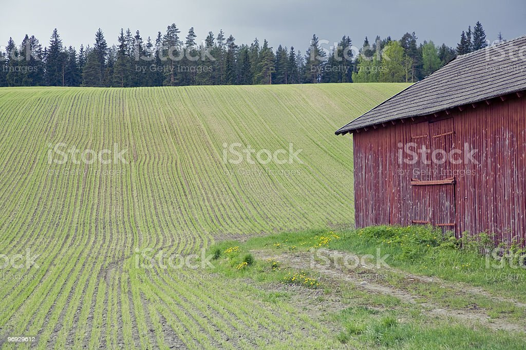 Spring Green Field royalty-free stock photo