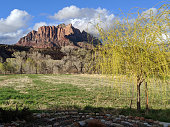 Spring green leaves on willow tree and pastures with Mt Kinesava in Zion National Park Utah in Rockville Utah