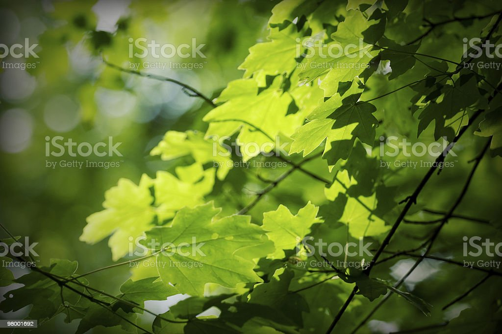 Spring green leaves royalty free stockfoto