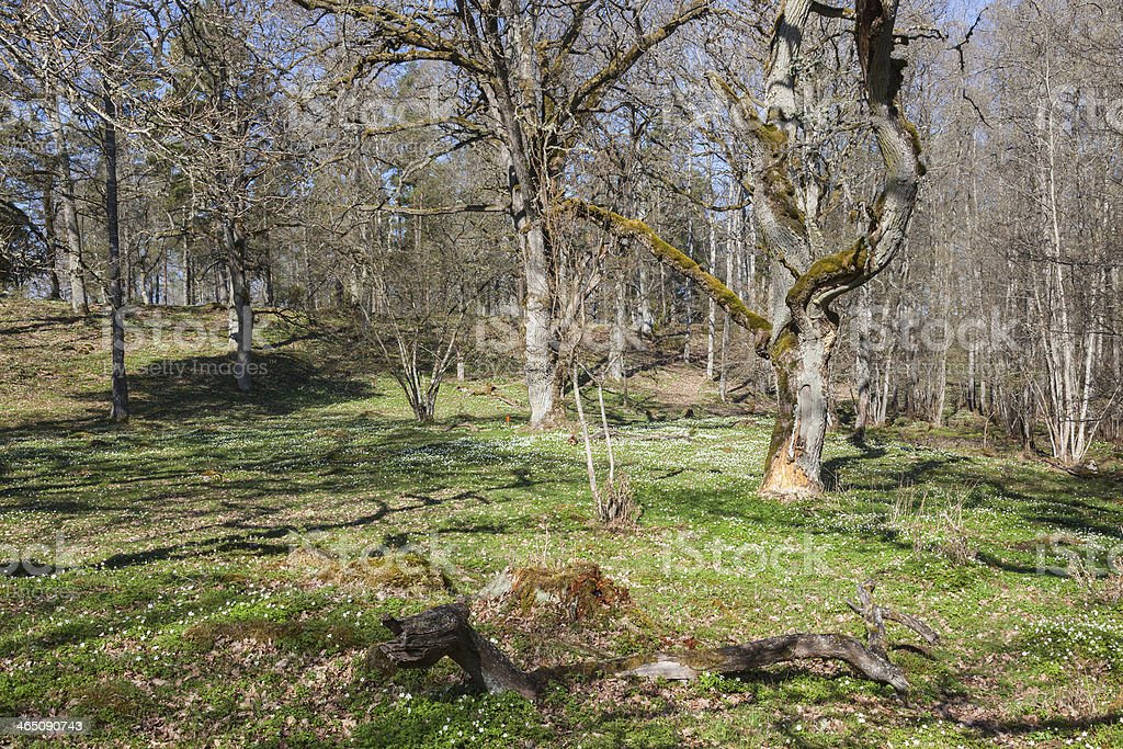 Spring green pasture royalty-free stock photo