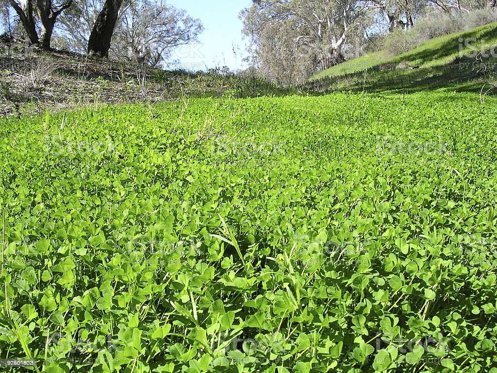 Spring green royalty-free stock photo
