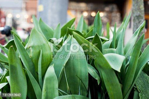 fresh spring green plants in Amsterdam