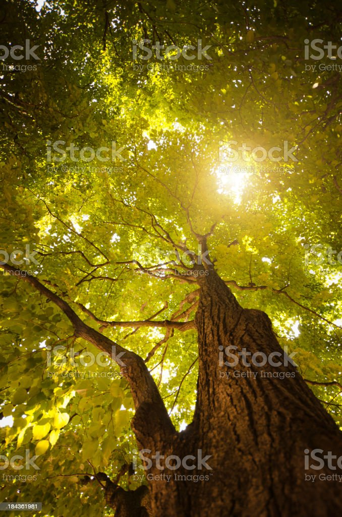 Spring green tree in the forest royalty-free stock photo