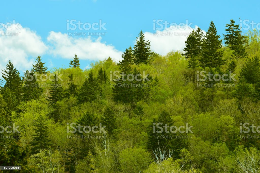Spring Greens stock photo