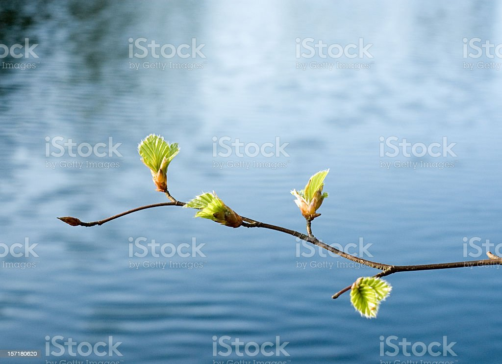 Spring Growth Over Water stock photo