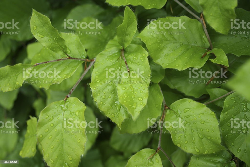 spring growth royalty-free stock photo