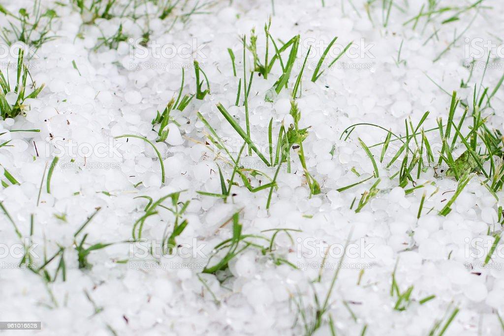 Frühling-Hagel auf grünen Rasen - Lizenzfrei Beschädigt Stock-Foto