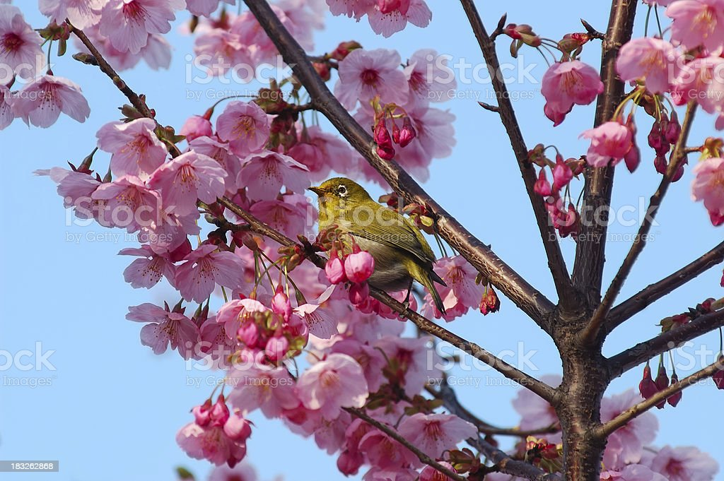 Spring has come royalty-free stock photo