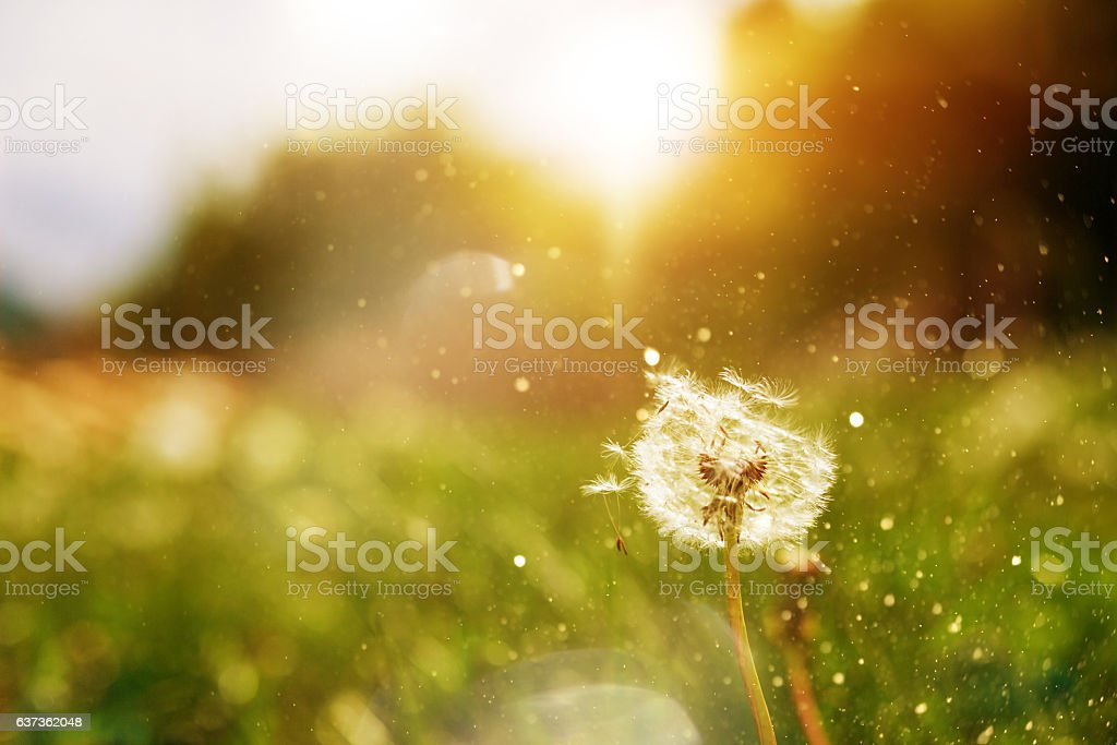 spring has come stock photo