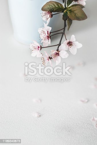 Spring holiday background. Tender fragile Spring  blossom flowers on branches,over light white background. Greeting macro card concept, copy space