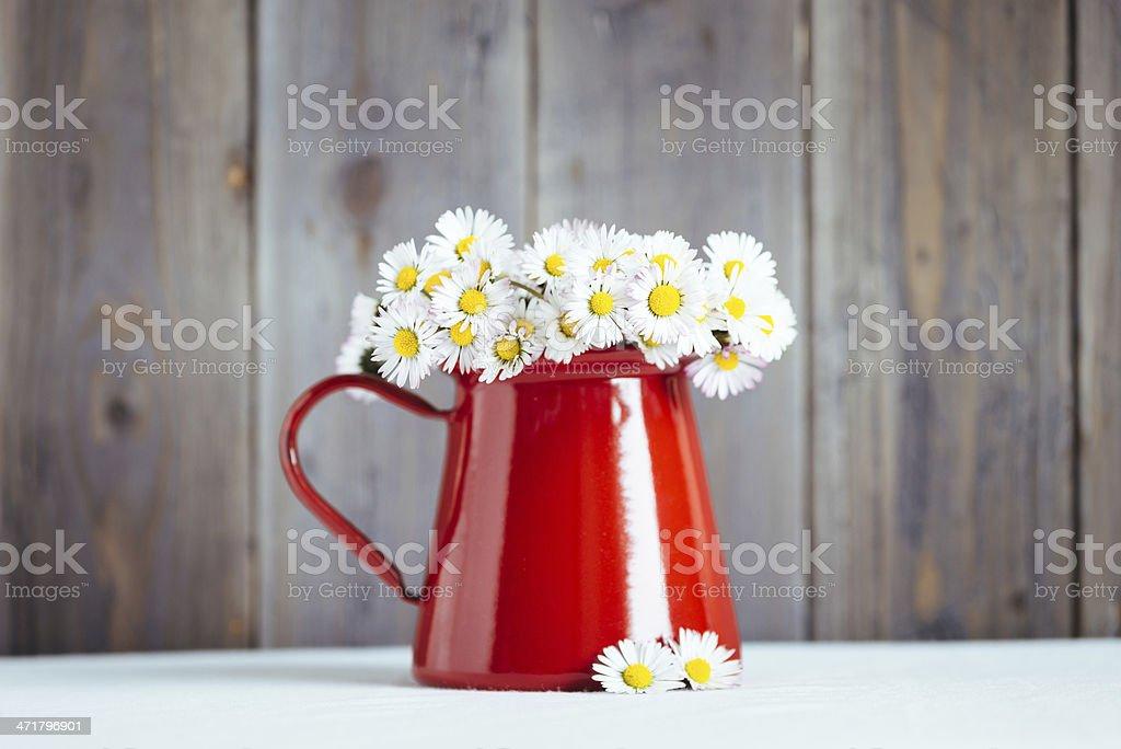 Spring home dekorativen Blumen – Foto