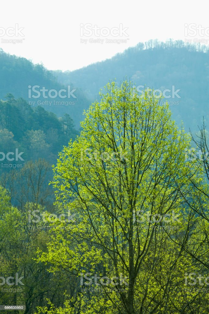 Spring Images, Oconaluftee Area, Great Smoky Mountains NP, NC stock photo