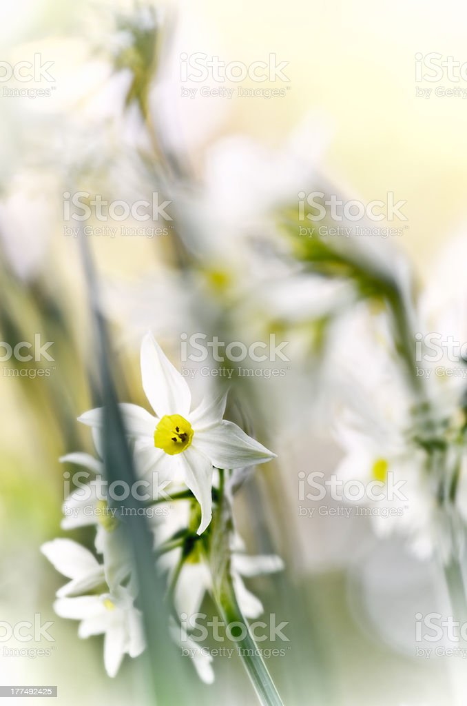 Spring impressions royalty-free stock photo