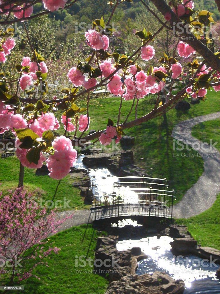 Spring in Big Cedar Lodge, Branson MO stock photo