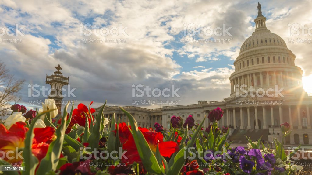 Spring in bloom at the United States Capitol Building stock photo