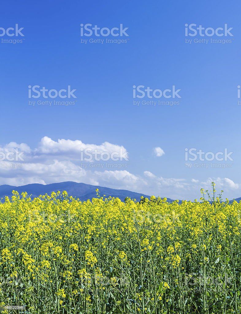 Spring in bloom royalty-free stock photo