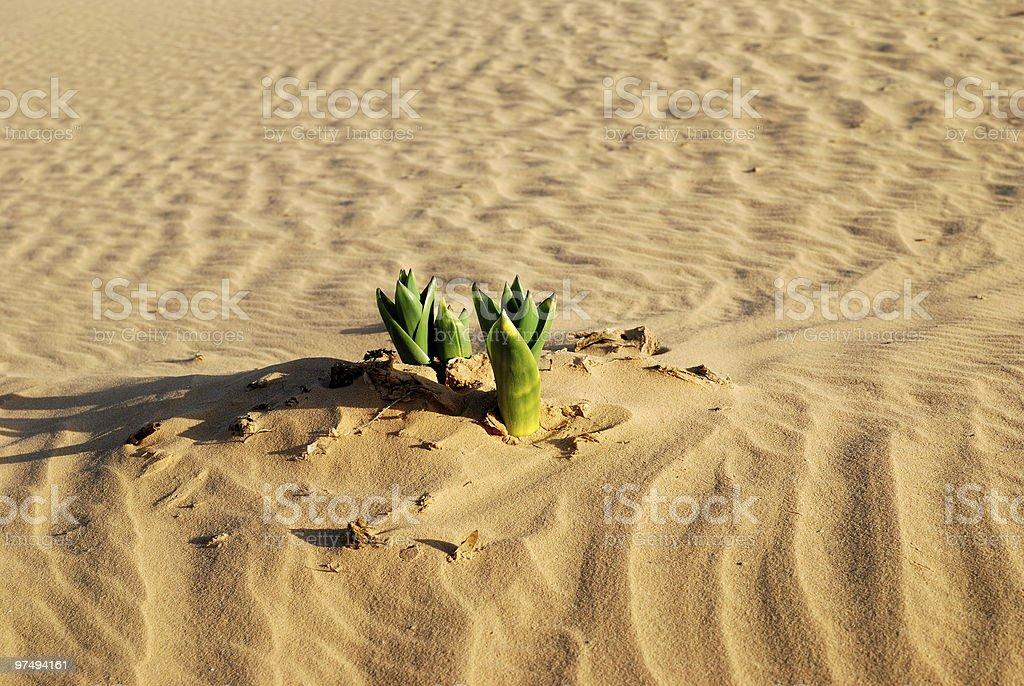 Spring in desert royalty-free stock photo