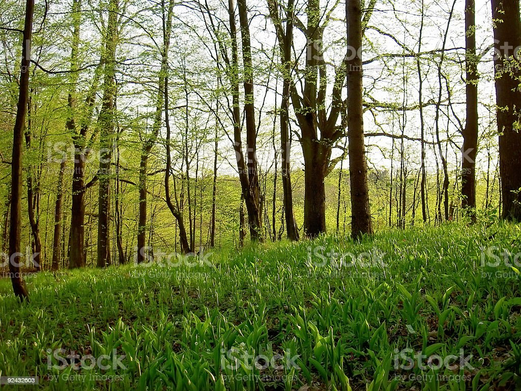 spring in forest royalty-free stock photo