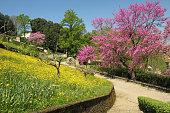 spring in garden in Italy