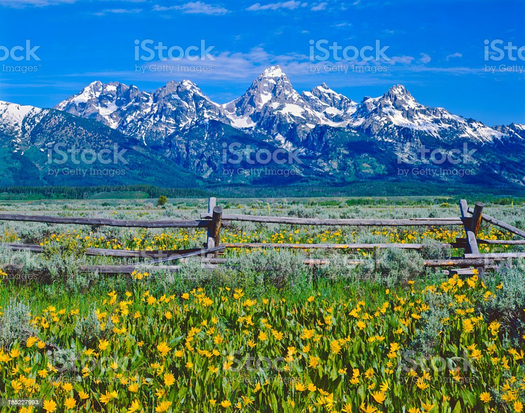 Spring in Grand Teton National Park stock photo