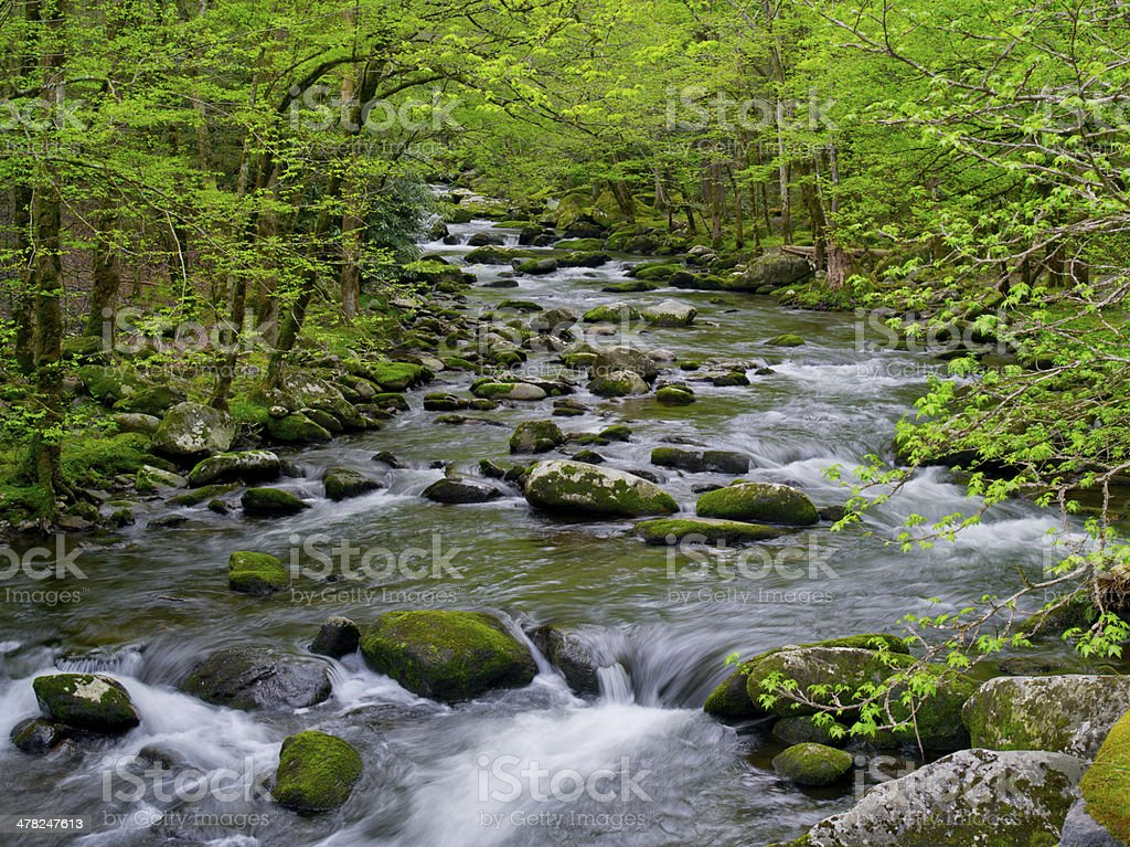 Spring in Great Smoky Mountains National Park, TN stock photo