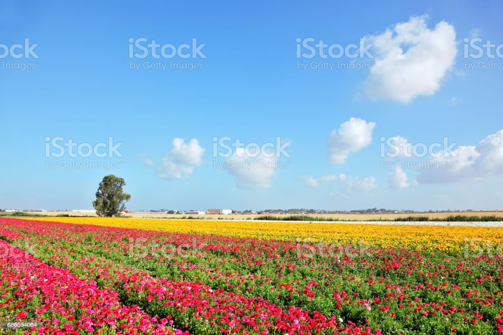 Spring in Israel royalty-free stock photo