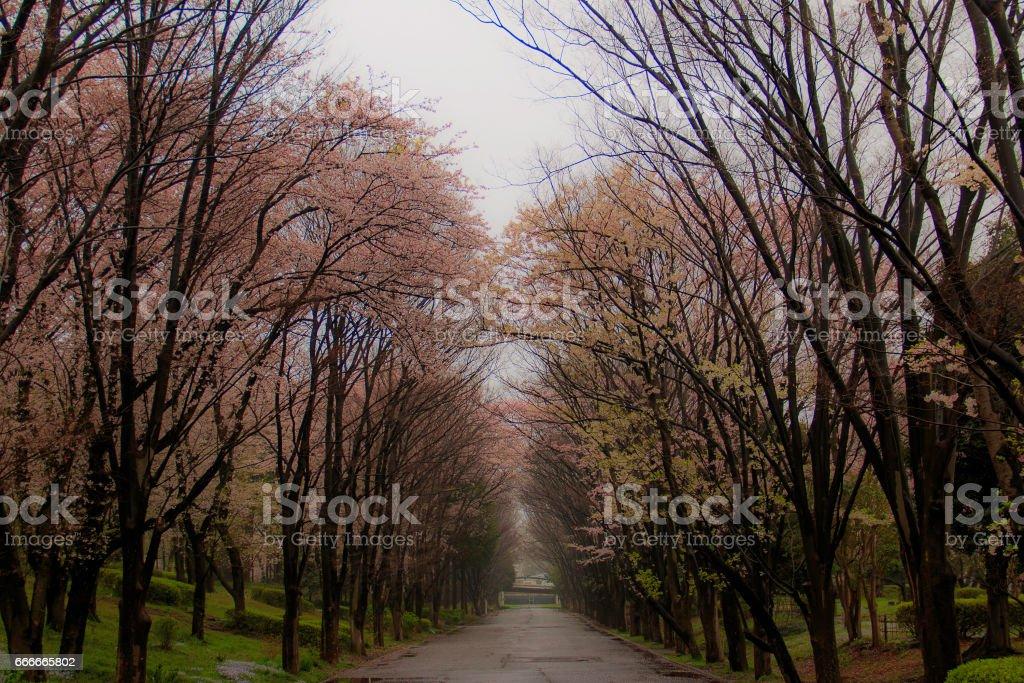 Spring in Japan stock photo