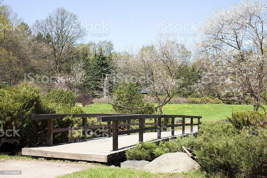 Spring in Japanese garden. royalty-free stock photo