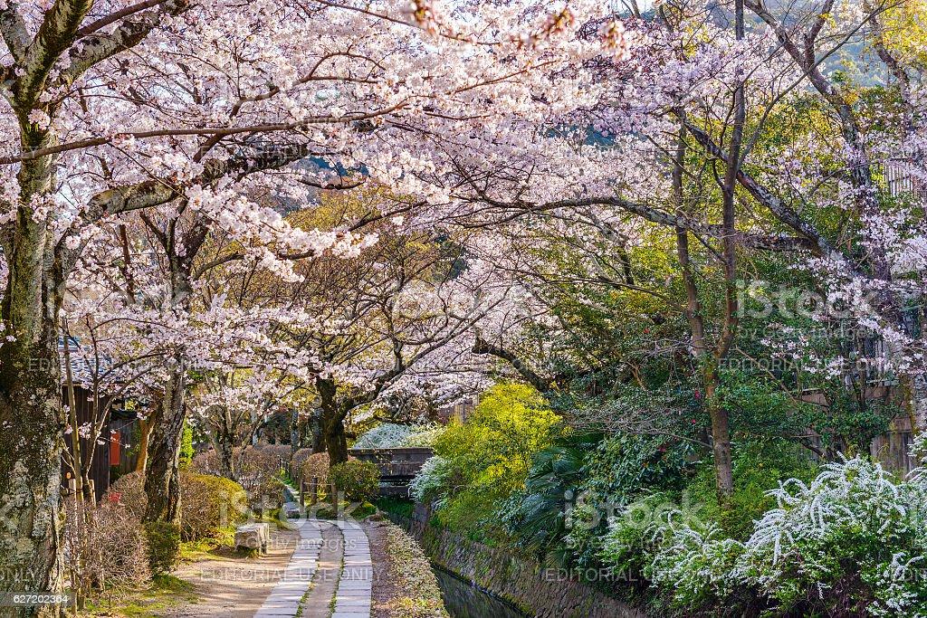 Spring in Kyoto stock photo