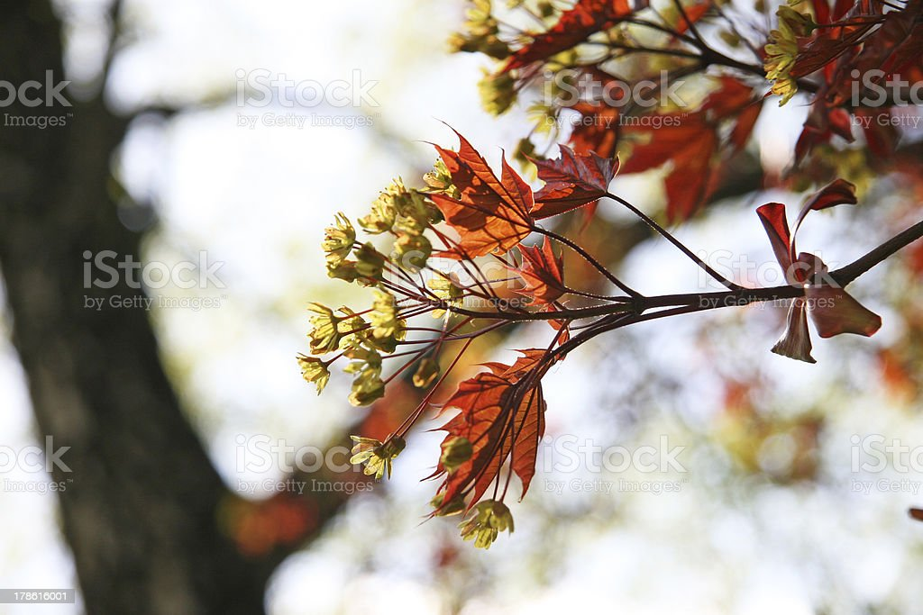 Spring in Moscow royalty-free stock photo